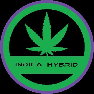 Indica-hybrid-strain-terpfex